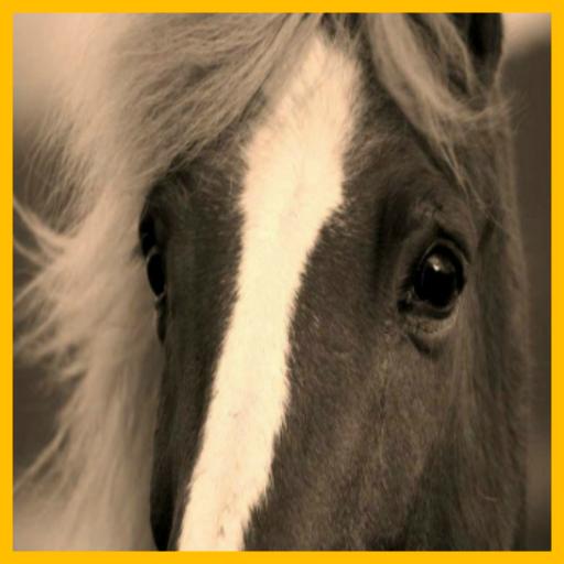 my-horse-2016