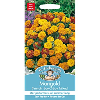 Johnsons Seeds Marigold French Honeycomb Seed