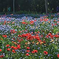 Miscela di semi di fiori selvatici, fiori perenni resistenti facili da coltivare, eccellente miscela per tutti gli usi…