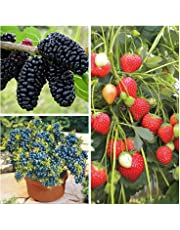 Seeds: Buy Seeds Online at Best Prices in India-Amazon in