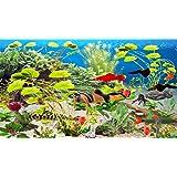 Clown Loach Aquarium [Download]
