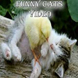 Funny Cats Video