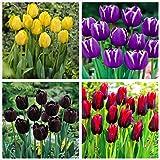 Los bulbos de tulipán,Plantar ahora,Flores que atraen mariposas y abejas,Hermosas flores cultivadas en casa,Plantas ornamenta