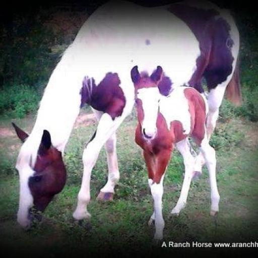 a-ranch-horse