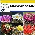 SAFLAX - Anzucht Set - Kakteen - Mammilaria Mischung - 40 Samen - Mit Mini-Gewächshaus, Anzuchtsubstrat und 2 Töpfen - Mammilaria Mix