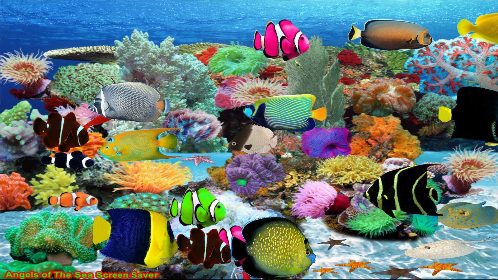Engel des Meeres Bildschirmschoner [Download] (Software Bilder)