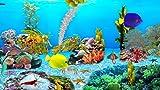 Meeresaquarium Drachen [Download]