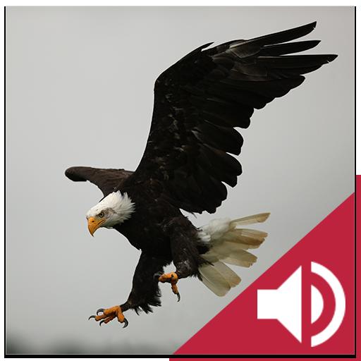 Bird and Animal soundboard