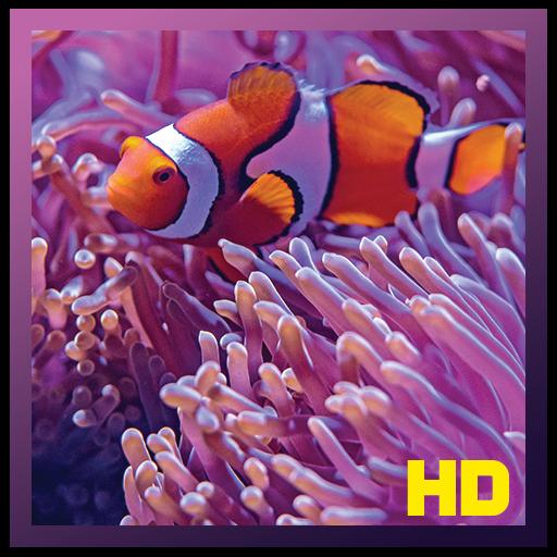 Coral Reef Aquarium Fish HD