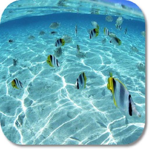 Under Water HD Wallpapers (Creator-software Calendar)