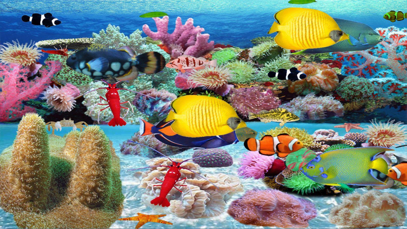 mer-de-corail-mou-telechargement