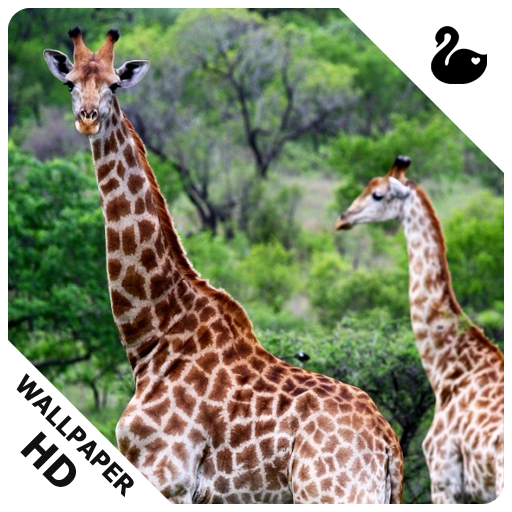 Giraffe Wallpapers Amazoncouk Appstore For Android