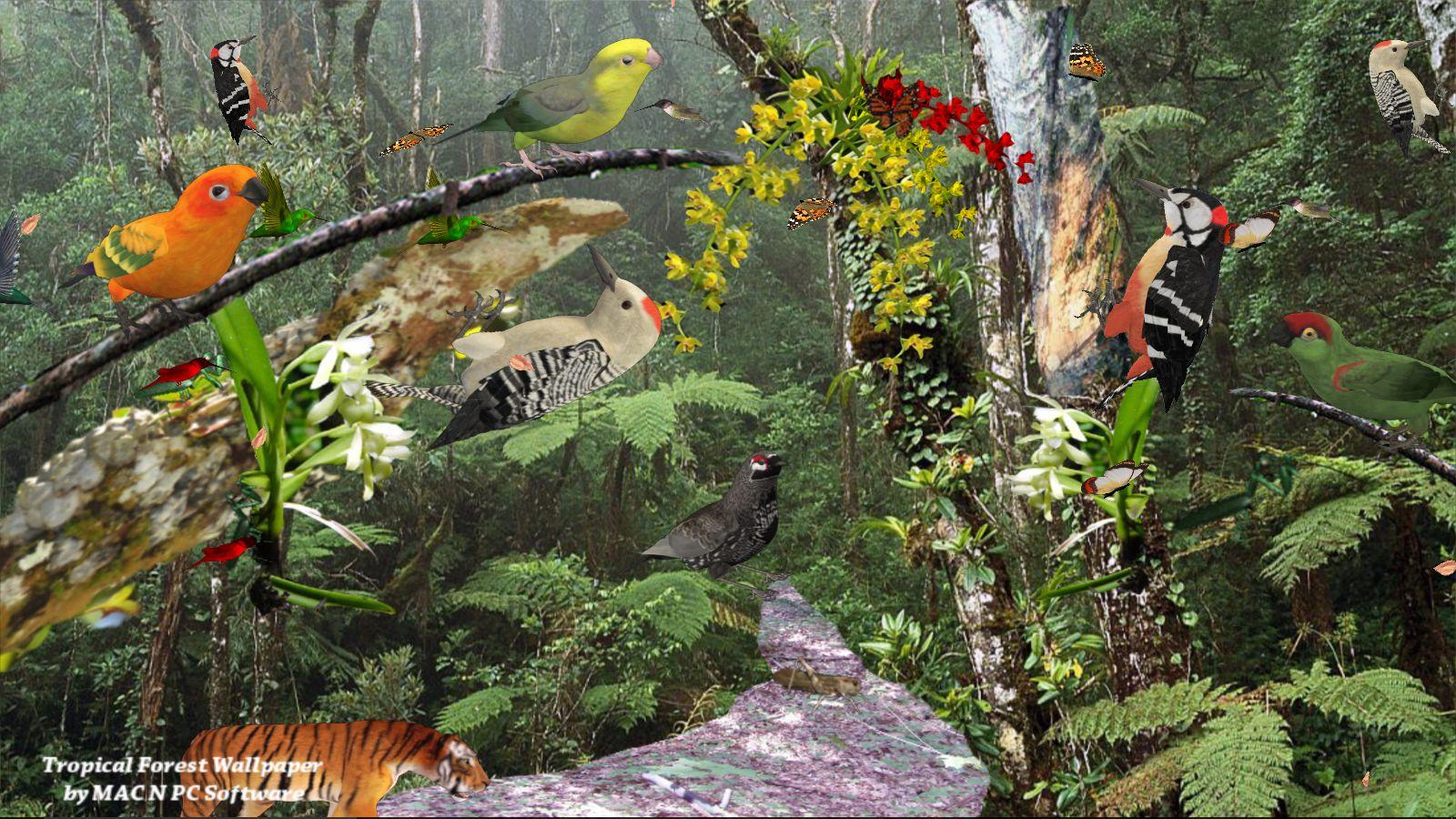 dschungeltapete Tropischer Wald [Download]