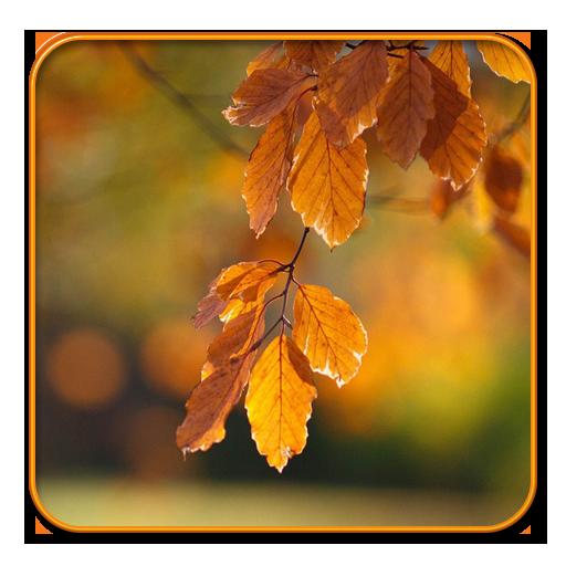 Colorful Leaf Live wallpaper (Live-leaf)