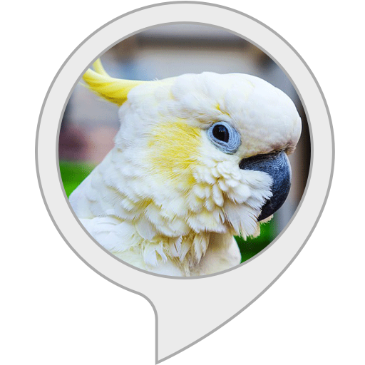 cockatoo facts