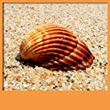 Seashell Live Wallpapers