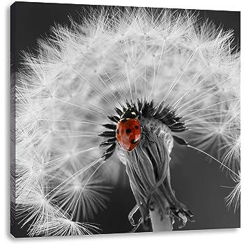 schöner Marienkäfer auf Pusteblume schwarz/weiß, Format: 40x40 auf ...