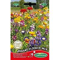 Germisem Dwarf Graines de Mélange de Fleurs 8 g EC1650 Multicolore