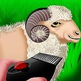 Wooly Sheep Shave : le jour où le berger tond l'agneau pour la récolte de la laine – Pro
