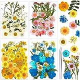 Auihiay 151 pièces Vraies Fleurs séchées Feuilles Fleurs pressées Multicolores avec Pince à épiler pour Bricolage Bougie rési