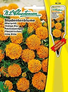 Studentenblume Niedrige Mischung einj/ährig Tagetes patula nana