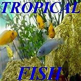 Breeding Tropical Fish!