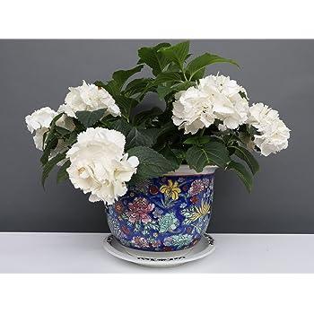 Blumentopf Blumenübertopf Pflanztopf Porzellan China Blau Ø 49 cm P0013-7