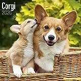 Corgi Calendar 2020