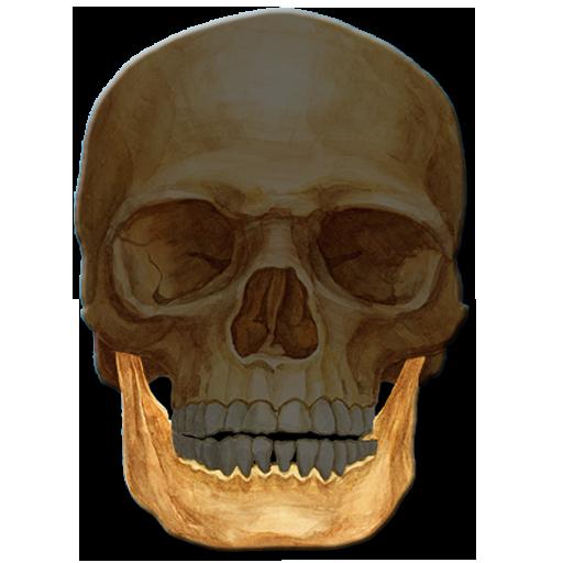 Anatomie Fragespiel