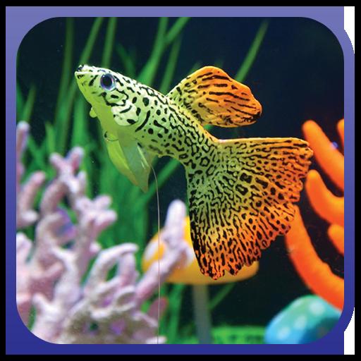 Aquarium Relax