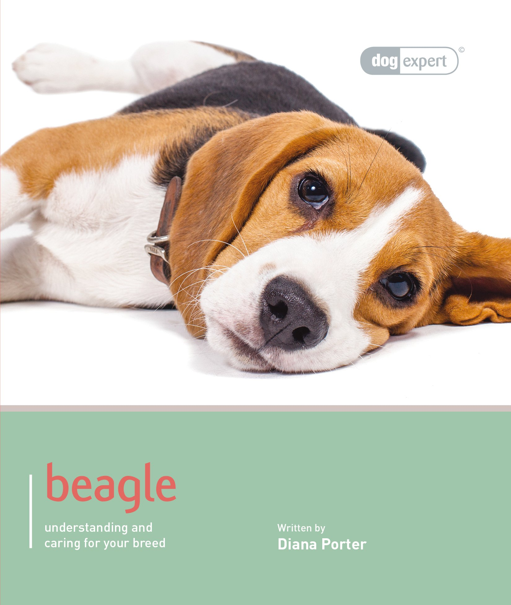 Beagle – Dog Expert (Best of Breed)