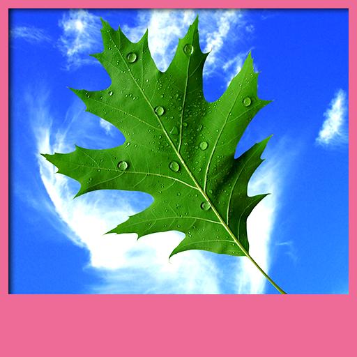 Leaves Live Hintergrundbilder -