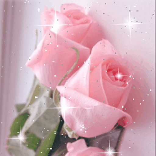 Beautiful Roses Live Wallpaper Flowers Amazonfr Appstore Pour Android