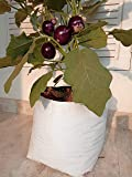 Rochfern Grow Bags (Pack of 10) Size-35x20x20cm, UV Treated Portable. Perfect for Terrace, Balcony, Kitchen Vegetable…
