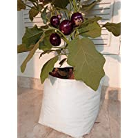 Rochfern Grow Bags (Pack of 10) Size-35x20x20cm, UV Treated Portable. Perfect for Terrace, Balcony, Kitchen Vegetable Plants and Gardening Flower Plants , Flats Item Name (aka Title)