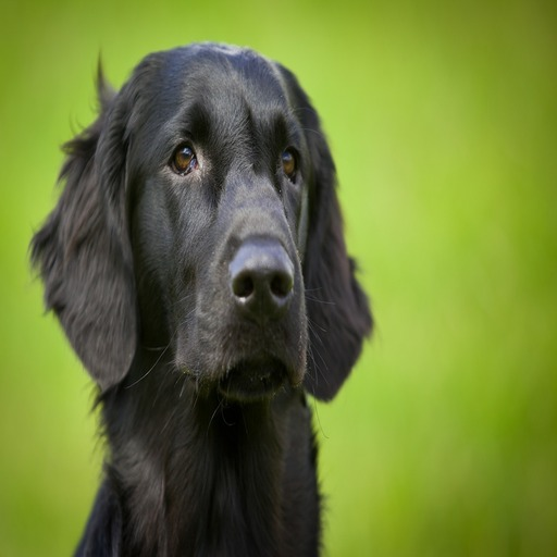 Liste der besten Lustige Hundenamen männlich
