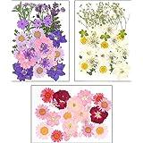 Dreamtop 85 stks Natuurlijke Gedroogde Geperste Bloemen Gemengde Meerdere Gedroogde Bloem Bladeren Bloemblaadjes voor DIY Kaa