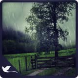 Virtual Rain Drops - Calm Rain Ambience