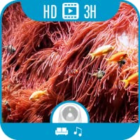 Aquarium HD Chillout & Lounge [3 Stunden Video & Musik]