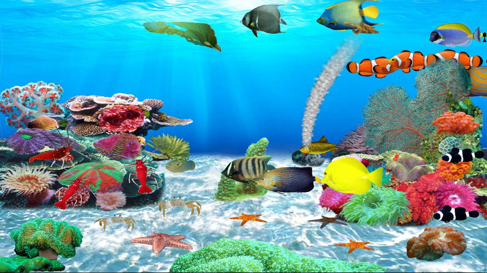 joyaux-de-la-mer-rouge-telechargement