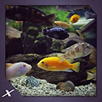 Chichild Fish Aquarium