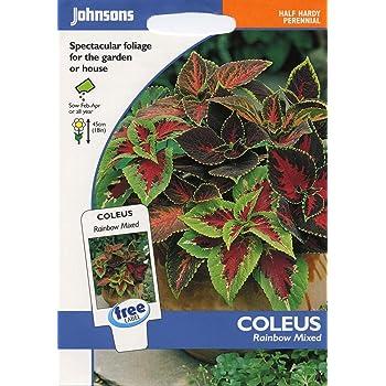 55 Seeds Flower Unwins Pictorial Packet Coleus Warpaint