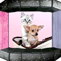 Hund & Katzen Klingeltöne