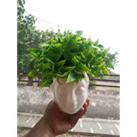 HYPERBOLES Artificial Bonsai Plant with Pot - Green - 10 Inch/25 cm