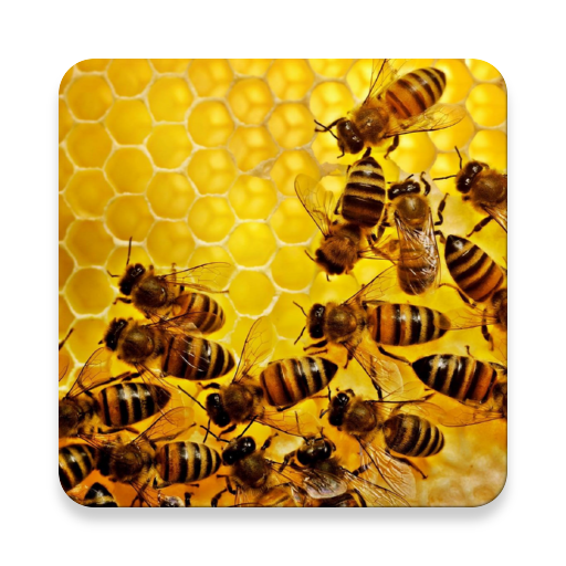Bienenhaus Buch
