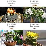 Exotische Kakteen Samen mit hoher Keimrate - Sukkulenten Samen Set für deinen eigenen wunderschön blühenden Kaktus (4er…