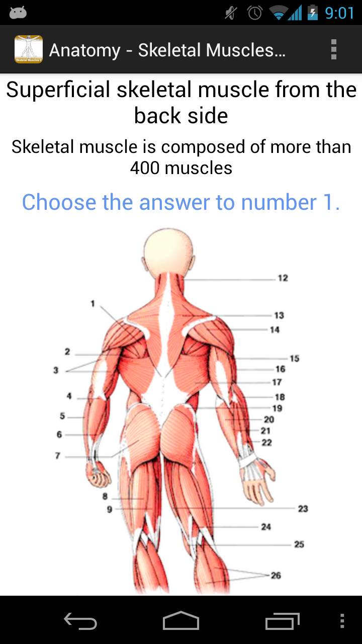 Anatomy - Skeletal Muscles 2 - Part 7: Amazon.co.uk: Appstore for ...