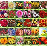 Creative Farmer Flower Seeds : Plant Seeds For Home Garden Flowers Combo of 30 Packet of Seeds Winter, Summer & Spring & All Season Garden Flower Seeds Pack By CreativeFarmer