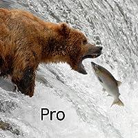 Katmai Bears Kindle Fire HD