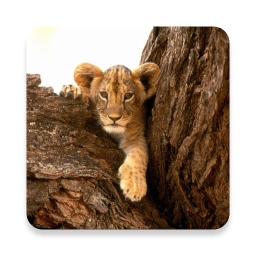 lion-baby-pictures